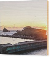 Sutro Seagulls Wood Print