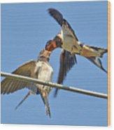 Swallow And Cub Wood Print