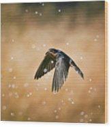 Swallow In Rain Wood Print