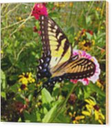 Swallow Tail Butterfly Enjoying The Sunshine Wood Print