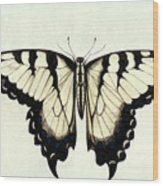 Swallow-tail Butterfly Wood Print