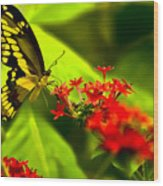 Swallow Tail Wood Print