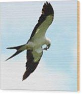 Swallow-tailed Kite Eating Wood Print