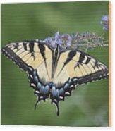 Swallowtail 20120723_24a Wood Print