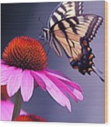 Swallowtail And Coneflower Wood Print
