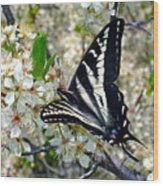 Swallowtail And Plum Blossoms Wood Print