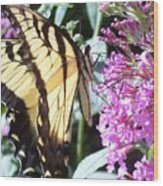 Swallowtail Wood Print by Anna Villarreal Garbis