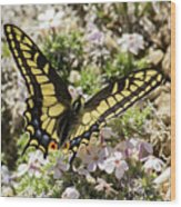 Swallowtail At Sand Wash Wood Print