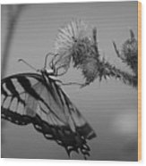 Swallowtail Black And White Wood Print