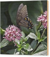 Swallowtail Buterfly Wood Print
