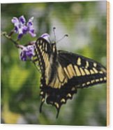 Swallowtail Butterfly 2 Wood Print