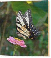 Swallowtail Butterfly 3 Wood Print