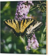 Swallowtail Butterfly At The Maryland Zoo Wood Print
