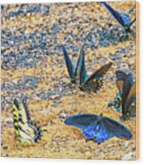 Swallowtail Butterfly Convention Wood Print