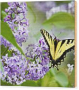 Swallowtail Butterfly On Lilacs Wood Print