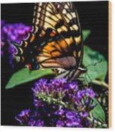 Swallowtail Feasting Wood Print
