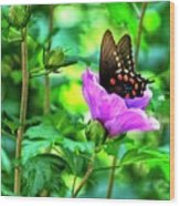 Swallowtail In Flower Wood Print