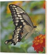 Swallowtail On A Lantana Wood Print
