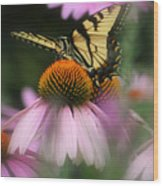 Swallowtail On Coneflower Wood Print