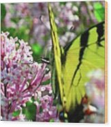 Swallowtail On Korean Lilac Florals Wood Print