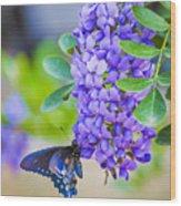Swallowtail On Mountain Laurel Wood Print