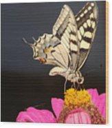 Swallowtail On Pink Flower  Wood Print