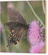 Swallowtail On Thistle Wood Print