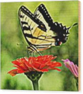 Swallowtail Resting Wood Print