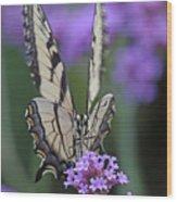 Swallowtail Staredown Wood Print
