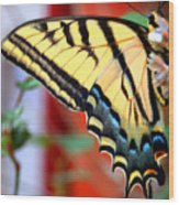 Swallowtail Wing Wood Print