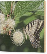 Swallowtail With Flowers Wood Print