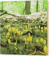 Swamp Becon Fungi Wood Print