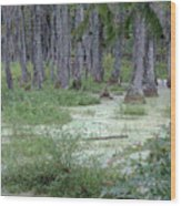 Swamp Garden At Magnolia Plantation And Gardens Wood Print