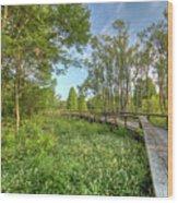 Swamp Garden Magnolia Plantation Wood Print