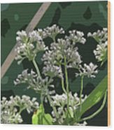 Swamp Milkweed Abstract Wood Print