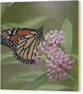 Swamp Milkweed Monarch Wood Print