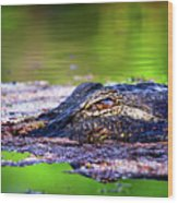 Swamp Patrol Wood Print