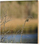 Swamp Sparrow Wood Print