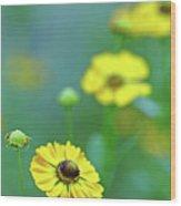 Swamp Sunflower Wood Print