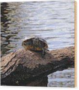 Swamp Turtle Wood Print