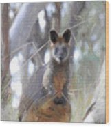Swamp Wallaby Wood Print