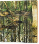 Swamps Are Beautiful Too Wood Print