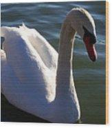 Swan 000 Wood Print