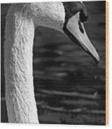 Swan 1 Wood Print