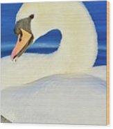 Swan 9 Wood Print