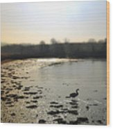Swan At Coombe Cellars Devon, Teignmouth Wood Print
