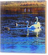 When It Seems Like The Swans Are Ruling The Sea  Wood Print by Hilde Widerberg