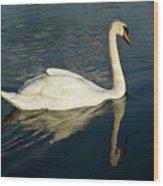 Swan Blasting Away Wood Print