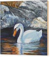 Swan By Rocks Wood Print