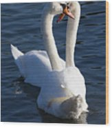 Swan Courtship  Wood Print